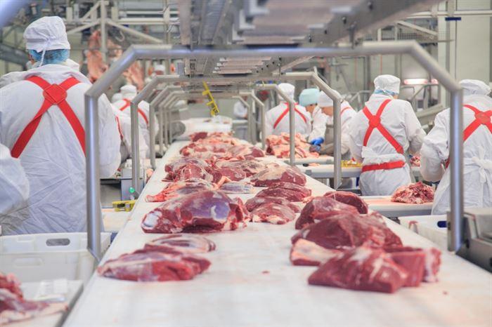 إنتاج اللحوم من الأبقار