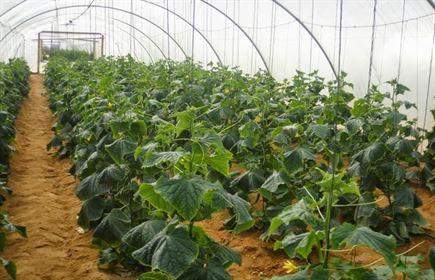 تطوير طرق اضافة الاسمدة لتقليل الفاقد منها والمحافظة على المحاصيل