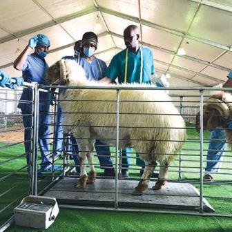 دورة فى كيفية تشخيص الأمراض فى حيوانات المزرعة