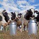 تطبيقات علوم الوراثة في دعم الإنتاج الحيواني ( تسمين – حلابه)