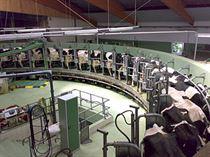 النظم الحديثة في تربية ماشية اللبن
