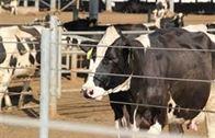 التقنيات الحديثة في تربية الماشية.