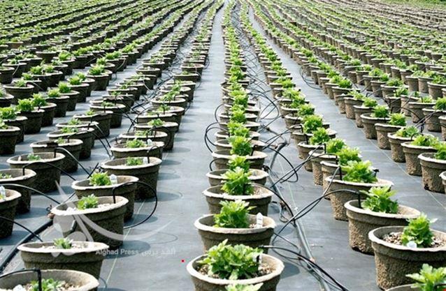 انتاج نباتات مقاومة للإصابة المرضية والحشرية وعوامل التقسية عن طريق التكنولوجيا الحيوية