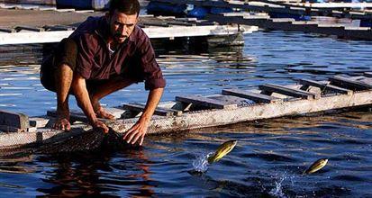 تطوير طرق تربية الاسماك والاستفادة