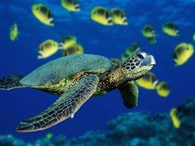 والقشريات والطحالب البحرية