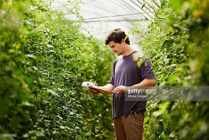 أنظمة إدارة أمن وسلامة الغذاء